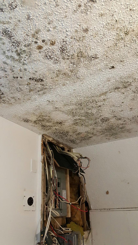 mold removal markham vaughan richmond hill