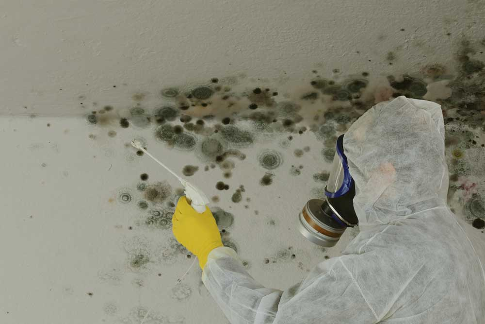 mold removal mold remediation markham