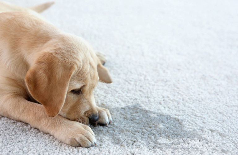 What does professional pet urine odor removal entails